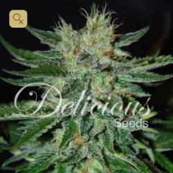 Sugar Black Rose · Delicious Seeds