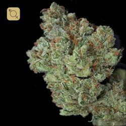 Ghost Train Haze Regular · Rare Dankness