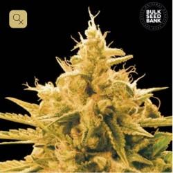 Ananas Funk · Bulk Seed Bank