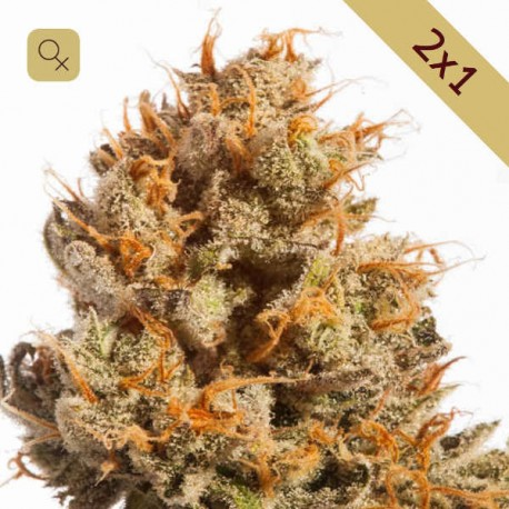 Pure Amnesia Promoción 2x1 · Mr Natural Seeds