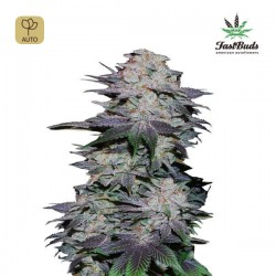 Blackberry Auto · FastBuds