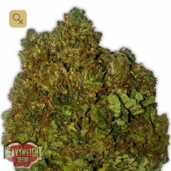 Money Bush · Heavyweight Seeds
