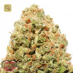 Strawberry Cake · Heavyweight Seeds