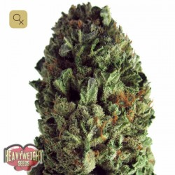 Budzilla · Heavyweight Seeds