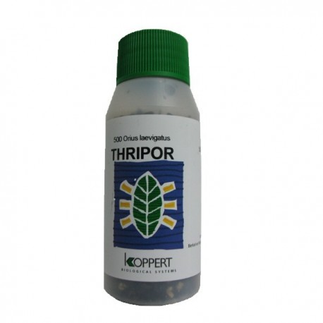 Thripor-L · Koppert