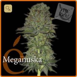 Meganuska · Elite Seeds