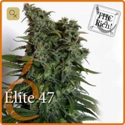 Elite 47 · Elite Seeds