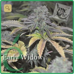 Early Widow · Elite Seeds