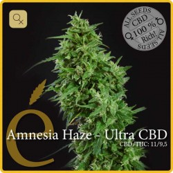 Amnesia Haze Ultra CBD · Elite Seeds