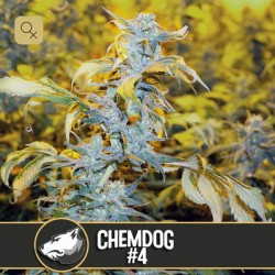 Chemdog 4 · Blimburn