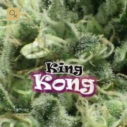 King Kong · Dr Underground