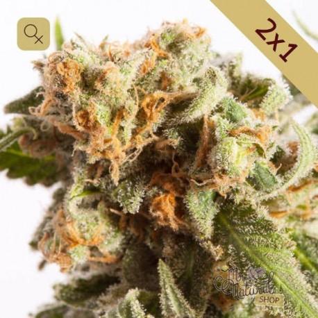 Promoción 2x1 Amnesia Cheese · Mr Natural Seeds
