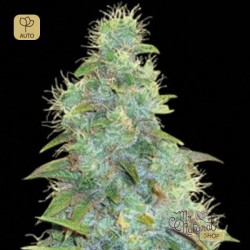 Auto Sweet Tooth · Bulk Seed Bank