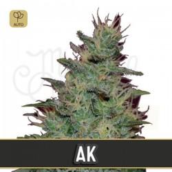 AK Auto · Blimburn