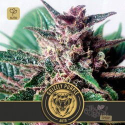 Grizzly Purple Auto · Blimburn