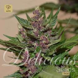 Dark Purple Auto · Delicious Seeds