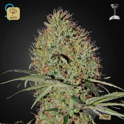 Super Bud Auto · Green House