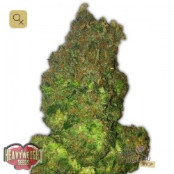 Fruit Punch Auto · Heavyweight Seeds