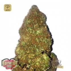 Jackpot Auto · Heavyweight Seeds
