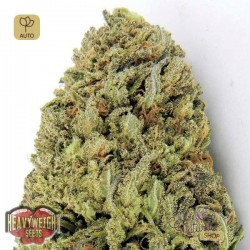 Fast & Vast Auto · Heavyweight Seeds