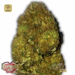 Skunky Monkey Auto · Heavyweight Seeds
