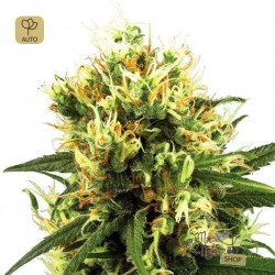 White Haze Auto · White Label