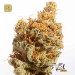Dutch Queen · Mr Natural Seeds