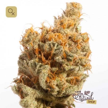 Dutch Queen · Mr Natural Seeds